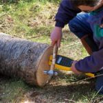 Figure 6. Measuring acoustic velocity of each log at the Hood Canal Seed Orchard.